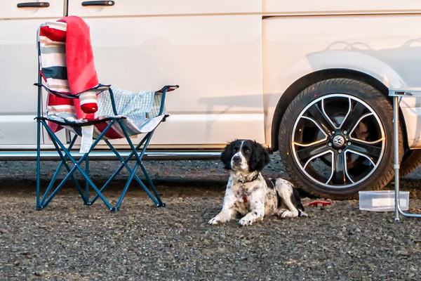 Campervan Dog